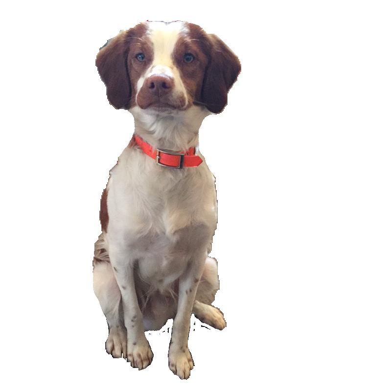 Dog Friendly Workplace
