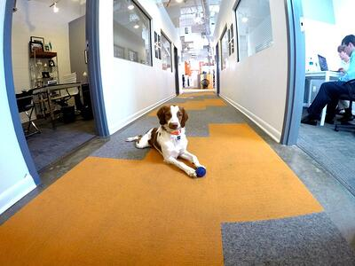 everyday-is-bring-your-dog-to-work-day.jpg